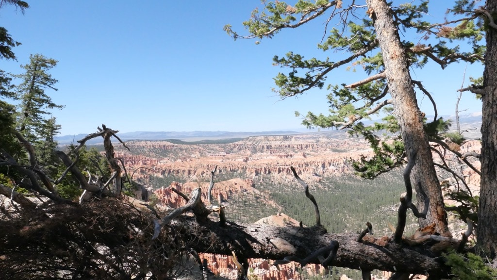 picture of Bryce Canyon