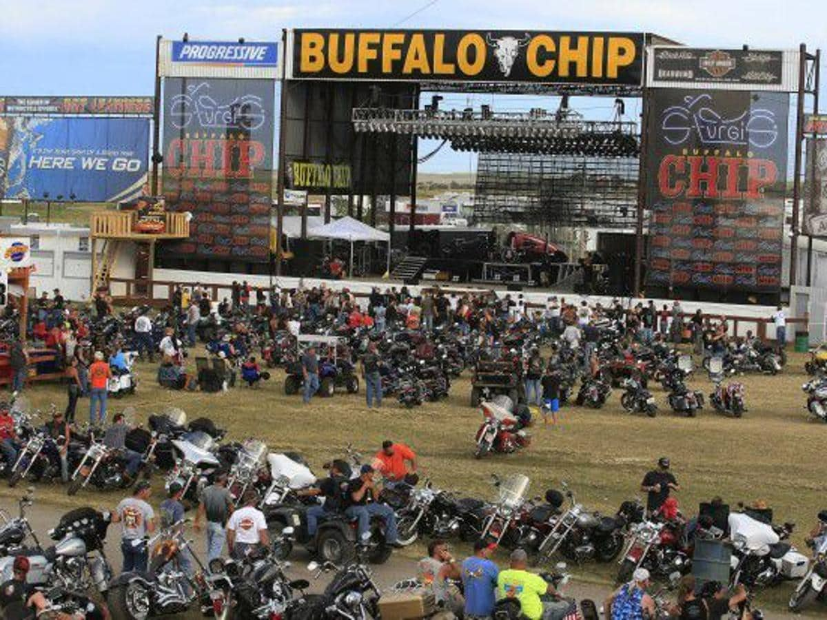 picture of Buffalo Chip