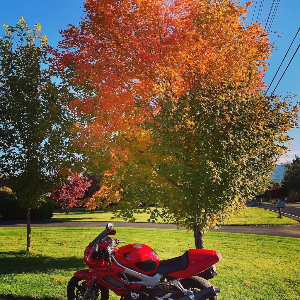 picture of Fall Colors